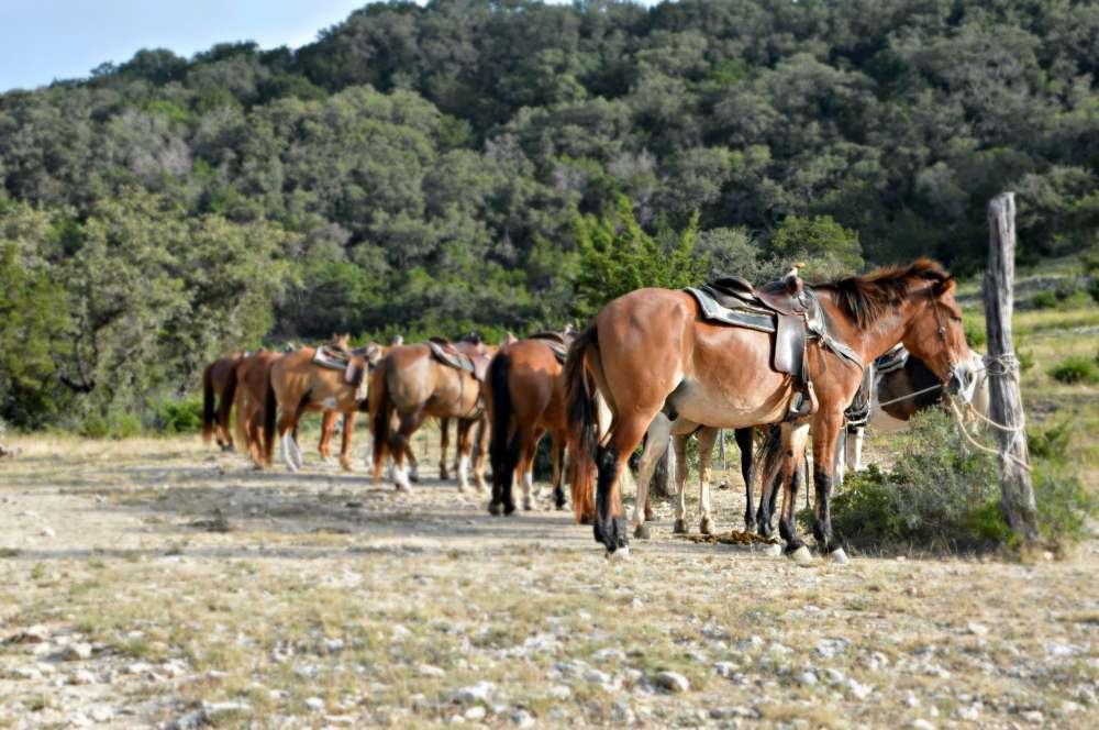 Cavalli al ranch