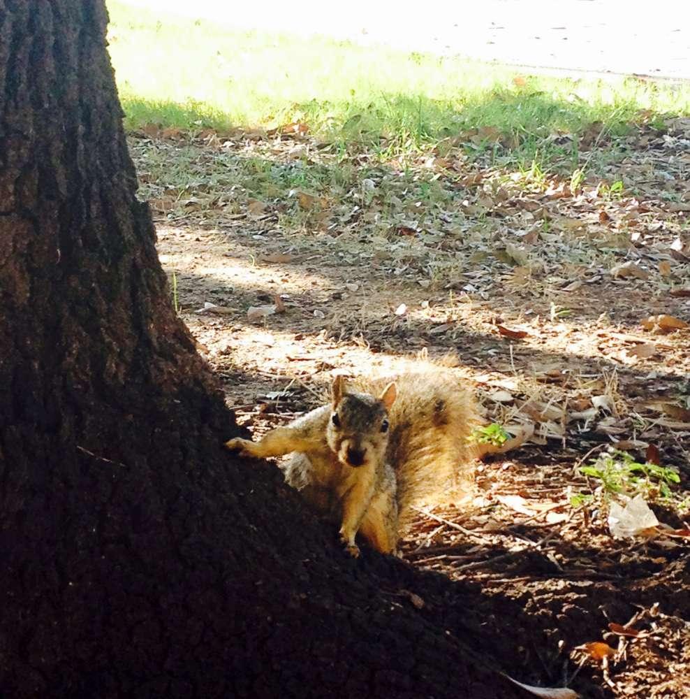 2.scoiattolo-1000