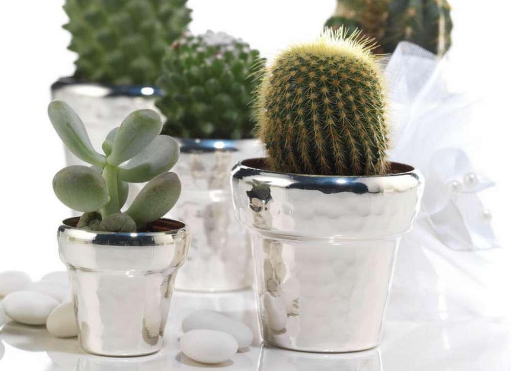 bomboniere cactus-1000