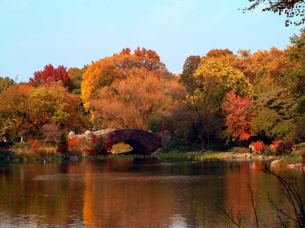 Central Park-1000