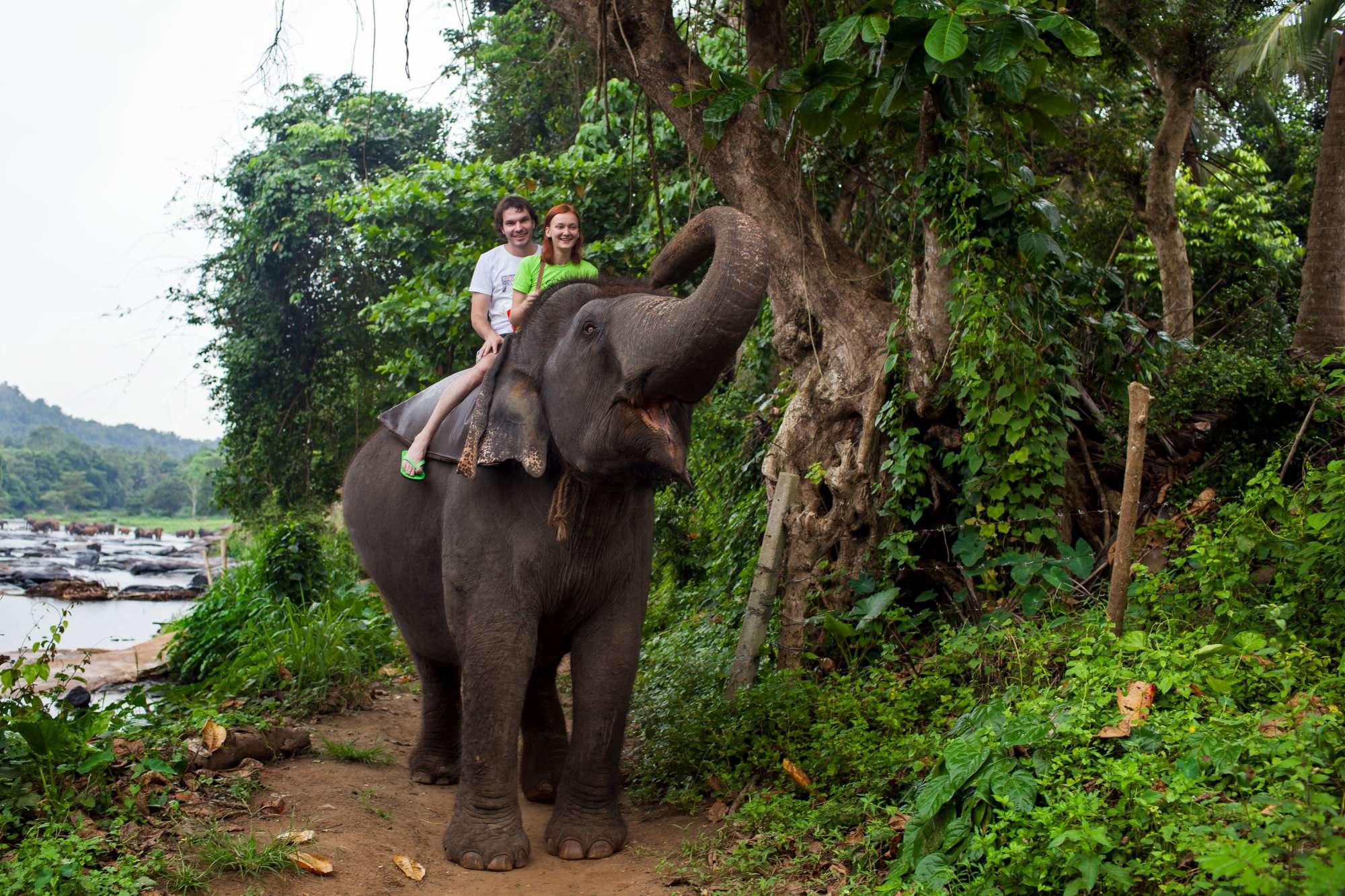Sposi in sella a un elefante in India