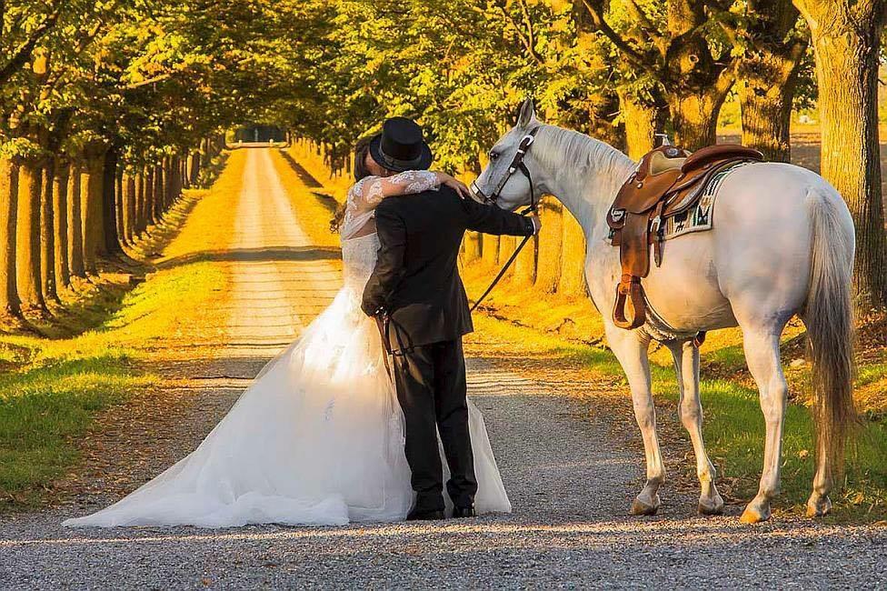 Matrimonio tema cani e cavalli