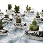 Bomboniere Argenesi, tra sassi e piante grasse