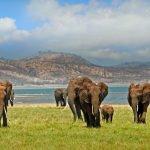 Viaggio di nozze in Zimbabwe, un paradiso da scoprire