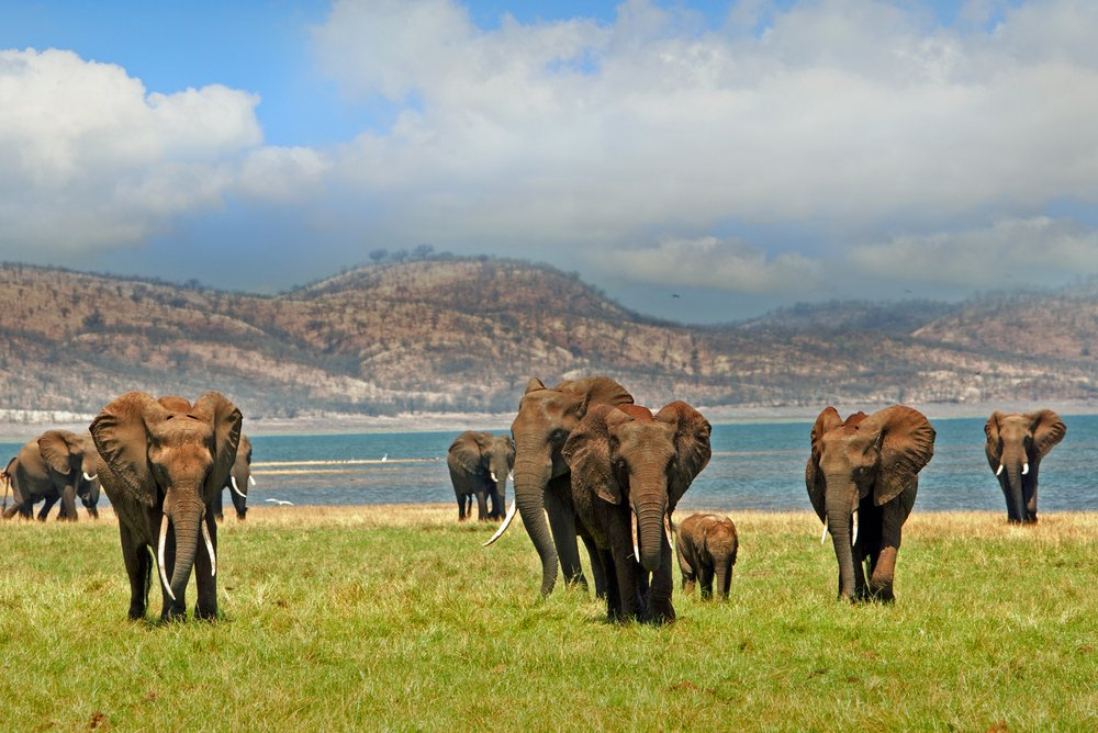 viaggio di nozze on Zimbabwe, alla scoperta degli elefanti