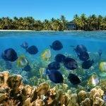 Viaggio di nozze a Panama e Bocas del Toro